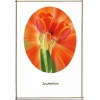 Dazzeling Orange Tulips Wedding Invitation